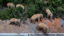 China Wilde Elefanten wandern