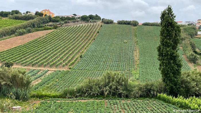 Polja u okolici Torres Vedrasa u unutrašnjosti Portugala