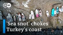 """Der türkische Präsident Erdogan verspricht, den Ausbruch von """"Meeresrotz"""" zu bekämpfen"""