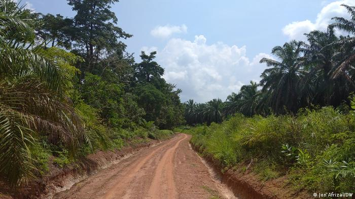 Jalan tanah di Jambi