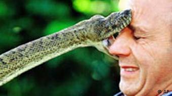 Snake biting man's face