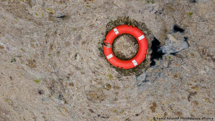 An aerial photo of the sea covered in sea snot, with an orange rescue buoy floating in it