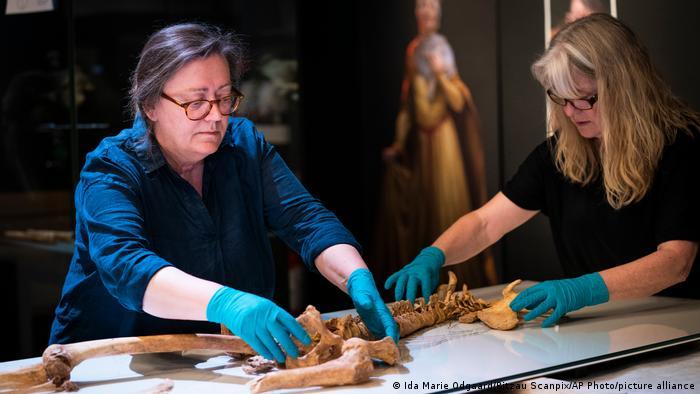 Staf Museum Nasional Denmark merapikan kerangka manusia