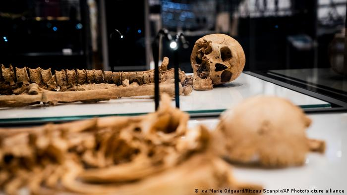 Two skeletons lie in a showcase at The National Museum of Denmark Wednesday, June 9, 2021 in Copenhagen.