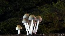 Stills aus der ZDF-Doku Im Königreich der Pilze