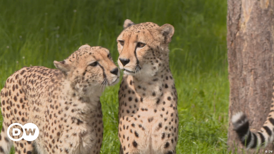 Wildlife Encounters- on safari in Germany