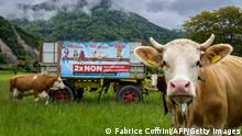 This photograph shows an electoral poster surrounded by cows reading in French: Two times No to the extreme phytosanitary initiatives, ahead of a vote of two people's initiatives trying to ban the use of pesticides for the Swiss agriculture, on May, 19, 2021 in Ollon, western Switzerland. - Swiss voters will go to the polls on June 13, 2021 on two initiatives which have already sparked heated debates. The first wants to stop subsidies to farmers who use pesticides or prophylactic antibiotics, or who import livestock feed. The second calls for a complete ban on the use of synthetic pesticides as well as an import ban on products which were manufactured with or which contain such pesticides. (Photo by Fabrice COFFRINI / AFP) (Photo by FABRICE COFFRINI/AFP via Getty Images)
