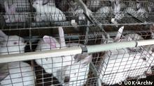 Industrielle Käfigzucht von Kaninchen in Tschechien Foto: ÚOK-Archiv / Zentrale Fachkommission der Kaninchenzüchter.