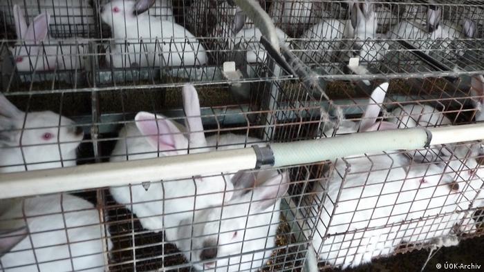 Tschechien Industrielle Käfigzucht von Kaninchen