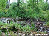 Pântanos são  poderosos reguladores do clima