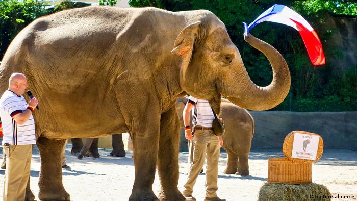 Гамбургский зоопарк