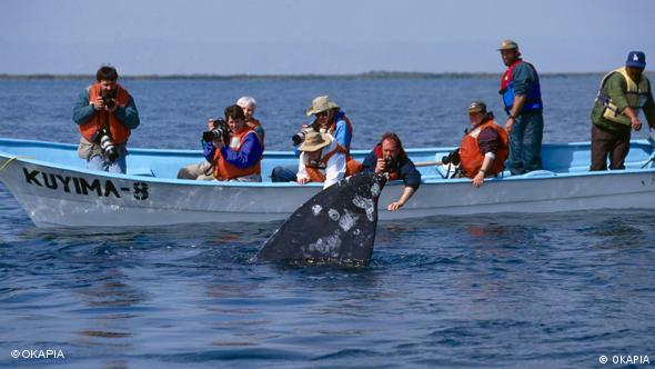 Whale watching tourism (OKAPIA)