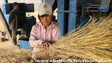 PYONGYANG, NORTH KOREA - OCTOBER 17, 2019: An employee harvesting grain crops at the Koh Chang cooperative farm near Pyongyang. The farm has over 1.500 employees; it supplies food for the Chollima Steel Complex, one of North Korea's largest steel plants, as well as Pyongyang's grocery stores. Yevgeny Agoshkov/TASS