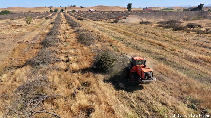 Καλιφόρνια, καλλιέργεια, αμυγδαλιάς, ξηρασία, λειψυδρία