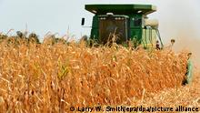 epa03363475 Mark Bergkamp uses a combine to harvest a crop near Wichita, Kansas, USA, 16 August 2012. The United States is experiencing the most widespread drought in more than half a century, which is devastating crops across the Midwest. EPA/LARRY W. SMITH ++ +++ dpa-Bildfunk +++