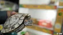 Eco India | Turtle