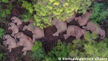 Чудернацька мандрівка слонів Китаєм
