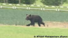 Japan |Jagd auf streunenden Bären in Sapporo
