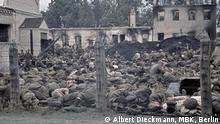 Durchgangslager für sowjetische Kriegsgefangene, Orscha, August 1941 Die Wehrmacht trifft kaum Vorbereitungen. In den völlig überfüllten Lagern fehlt meist jegliche Infrastruktur. Die Gefangenen werden nur unzureichend versorgt. Foto privat: Albert Dieckmann, MBK, Berlin