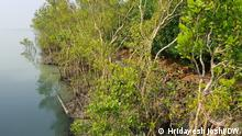 2017 Mangrove forest are in danger in India