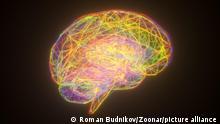 3d Rendering Gehirn Modell Neonfarben