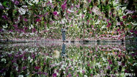 BdTD Japan | Floating Flower Garden