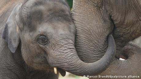 BdT Deutschland Elefanten-Kuscheln