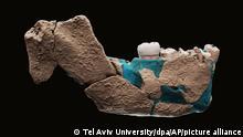 Israel Ausgrabungen - Homo Nesher Ramla