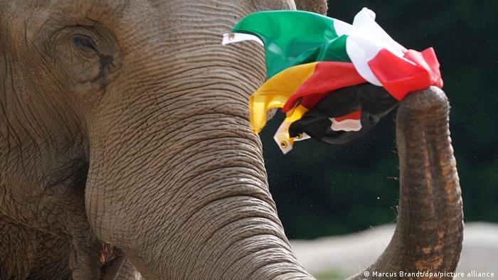 Elefantenkuh Yashoda mit der deutschen und der ungarischen Flagge