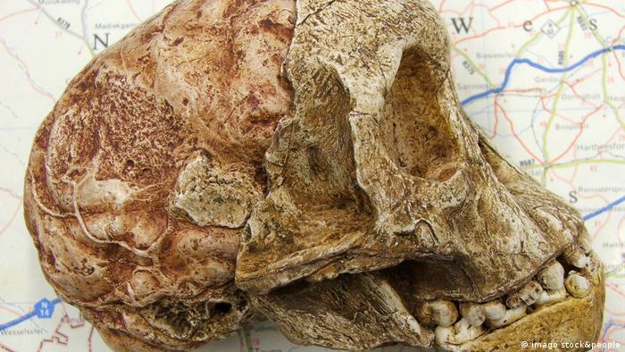 En 1924, mineros cerca de Taung, en Sudáfrica, descubrieron un cráneo inusual. El experto en anatomía Raymond Dart descubrió que pertenecía a un niño de tres años de la tribu hominini, al que llamó Australopithecus africanus. El fósil, de 2,8 millones de años de antigüedad, muestra un modo de andar erguido, lo que apoya la teoría de que los humanos modernos evolucionaron en África.
