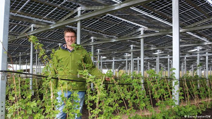 Farmer Fabian Kathaus with his solar panels and berries