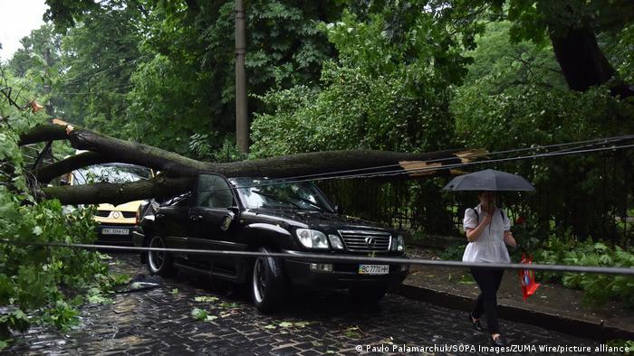 Внаслідок повалення дерев у місті пошкоджено чимало автомобілів