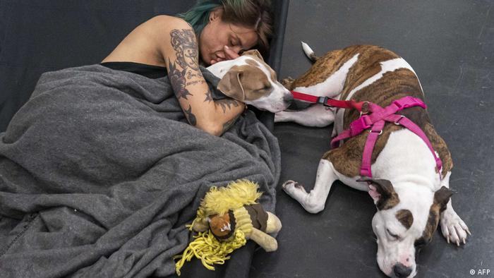 Frau liegt mit Hunden auf dem Boden