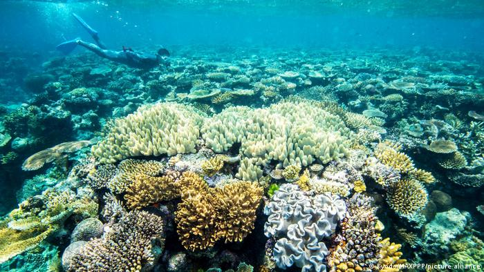 Coral on the Great Barrier Reef