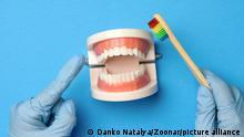 female hand in blue latex gloves holds plastic model of a human jaw with white teeth and wooden toothbrush on a blue background, oral hygiene, close up
