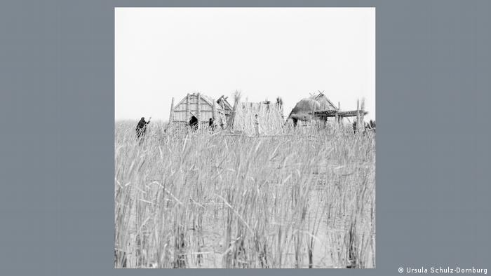 Reeds standing in water in the foreground, with homes made of reeds of the Marsh Arabs in the background.