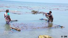02.07.2021 *** Eco India Sendung. seaweed,