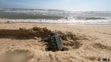 Brasiliens Traumküste – Schildkröten und Seekühe in Gefahr Feature-Nr.: 11333 SWR