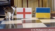 Fußball: EM, Finalrunde, vor dem Viertelfinale, Ukraine - England in der 10 Downing Street. Kater Larry, «Oberster Mäusejäger des Kabinetts», schnüffelt an der aufgestellten England Fahne und spricht den Sieg im morgigen Viertelfinale gegen die Ukraine England zu. +++ dpa-Bildfunk +++