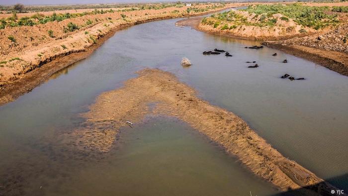 زیستگاهی به وسعت ۱۲۰ هزار هکتار و محیطی غنی از منابع جانوری و گیاهی در مرز ایران و عراق رو به موت است. صدها هزار ماهی و دهها گاومیش به خاطر کم آبی، گرما و سوءمدیریتهای اقلیمی در هورالعظیم تلف شدهاند.