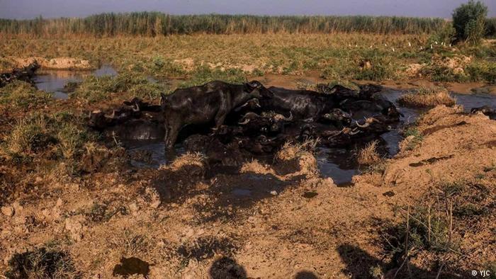 مدیرکل حفاظت محیط زیست خوزستان با تاکید بر کاهش بارندگی و ادامه خشکسالی، از توافق با سازمان آب و برق خوزستان برای رهاسازی موجی آب به تالاب خبر داده و گفته است: «آب موجود و قابل برنامهریزی در مخزن دریاچه سد کرخه به عنوان تامین کننده آب تالاب هورالعظیم شرایط مناسبی ندارد.»