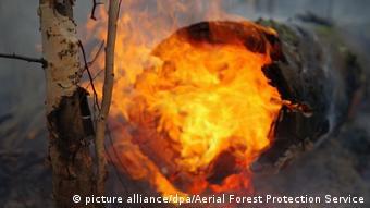 Охваченное пламенем дерево, Якутия, 2020 год