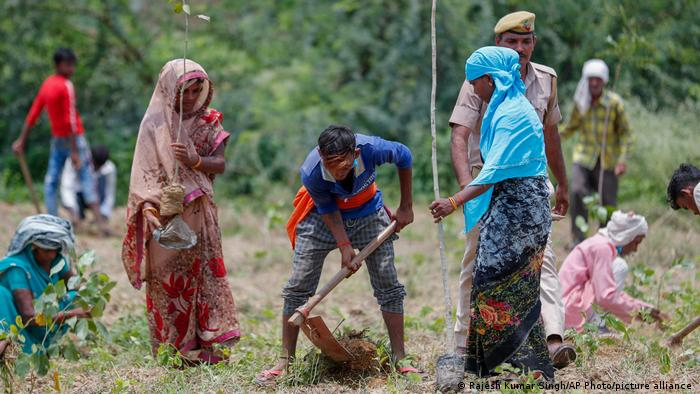 Indian Volunteers Plant 250 Million Saplings in One Day
