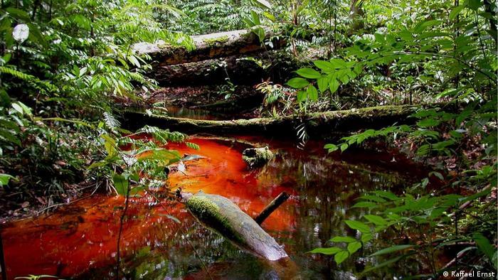 Al parecer, Ernst encontró la rana zombi a doscientos metros de este arroyo en la colina de Mabura.