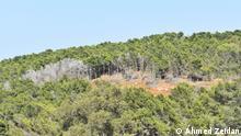 Patch of cut down trees in Al-Jabal al-Akhdar Libya.