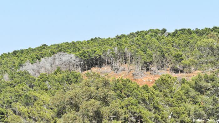 Bereich ohne Bäume in Al-Jabal al-Akhdar Libyen.
