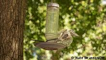 Outside a residential home in Washington, D.C. a skeletal bird prop is attached to a bird feeder to discourage the winged specimens from flocking to bird feeders on Monday, June 26, 2021.