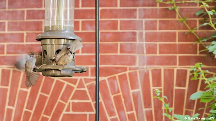 Pássaros voam até um comedouro do lado de fora de condomínios residenciais em Washington, D.C.
