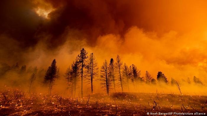 Лісова пожежа в Каліфорнії, липень 2021 року