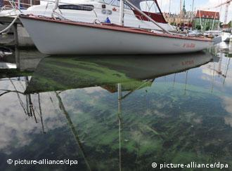Blue-green algae in the harbour of Stralsund, Germany